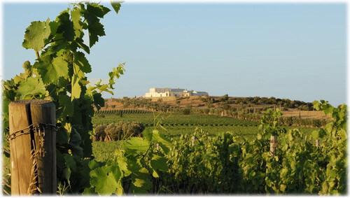 2020/10/10(土)イタリアワイン生産者によるWEBワインセミナー(通訳付き)